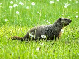 Ground Hog Outing by Misaki-chi
