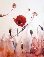 poppies by DariaKuznetsova