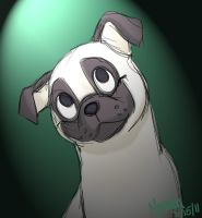 AT-Boo Boo The Pug by Coloran