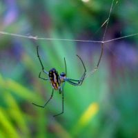 Hanging By a Thread by hosmer23