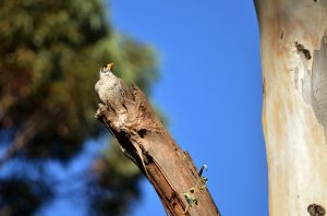 Perched on a broken branch by Mutilator-Of-Cookies
