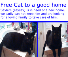 FREE CAT TO GOOD HOME IN WASHINGTON STATE by cassybabyfur