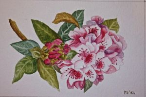 Rhododendron by migas90