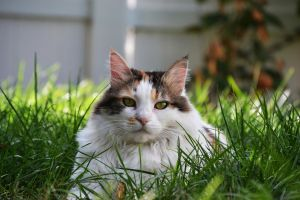 Cat In The Grass 1a by xenomorph1138