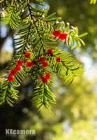 Red and Green by NXcamera