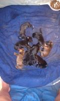 Puppies!! :3 by aspen4455