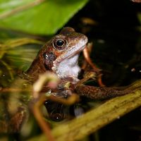 Proud Frog 3.. by quaddie