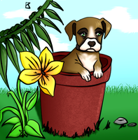 Boxer Puppy by raelea