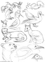 Animal Sketches by stuffaeamade