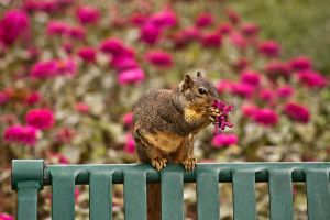 Squirrel eating flowers by AquaVixie
