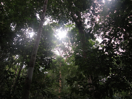 Borneo Rainforest VI by Sapphiresenthiss