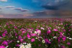 Cosmos Infinity by LinRuPhotography