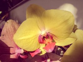 Sparkly Orchid by MadalinaGulerez