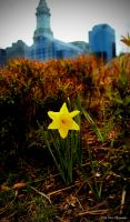 Big City Small Flower by MyLifeThroughTheLens