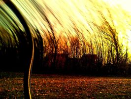 curved trees by Lulu0001