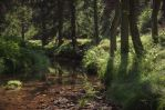 Trees by the river by erynlasgalenphotoart