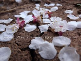 Scattered Sakura by Bizartistique