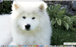 Desktop. Samoyed. by Bugspray609