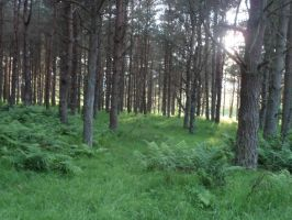 Stock ~ Forest by CaitlinDickson