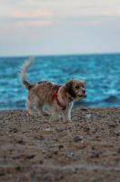 Puppy Sprinting On the Sands by Samuel-Benjamin