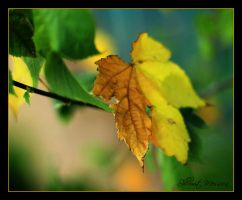 It's fall 2 by ShlomitMessica