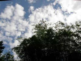 bamboo with sky by maryllis-stock