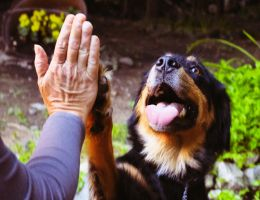 Roxie high five! by jonathanfaulkner