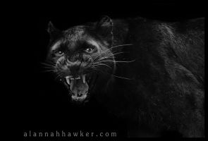 Black Panther 03 by Alannah-Hawker