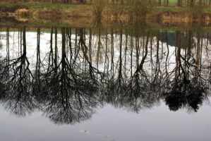 Rooted reflection by karliosi