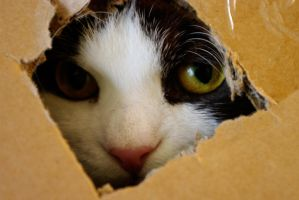 Cat in a Box by Vylen