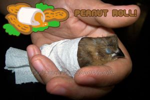 Peanut Roll!! by emmil