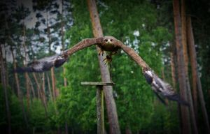 steppe eagle_III by deoroller