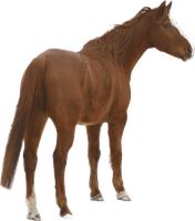 chestnut warmblood precut png by Nexu4