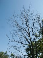 Leafless Bare Tree against the sky by RowyeStock