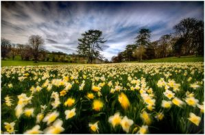 Spring day by Mohain