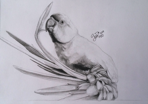 realistic Parrot_2017 by SofiMXD