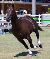 STOCK - Equitana 2013-407 by fillyrox