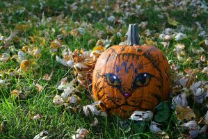 Felis Pumpkinus by ThreshTheSky