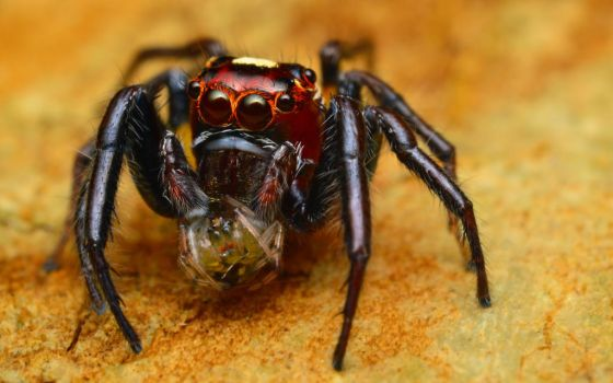 Thiodina with prey by Blaklisted