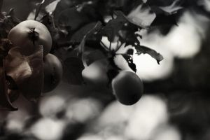 apples by untitled55