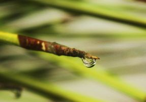 The Droplet by Phur-eak