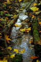 Little River by SmileyG