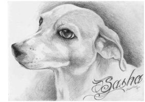 Sasha The Jack Russel by JustinMain