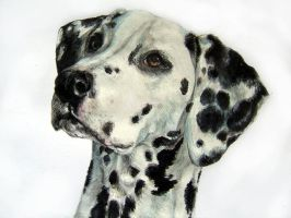 Bruce the dalmatian by BestPetPortraits