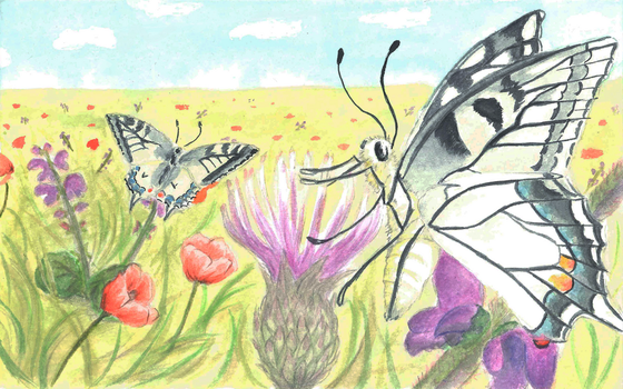 Butterfly postcard by GreyMind666