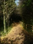 The Witches Path by faerieshelly