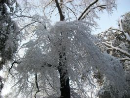 The Frosty Branch of Winter by Vee-Vii