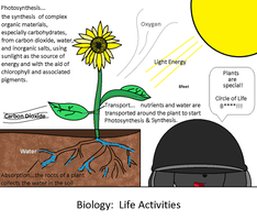 Life Activities: plants 3-in-1 by 8feet