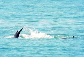 Dolphin Tail by bgbeachgurl