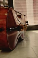 cello by Fortisinprocella